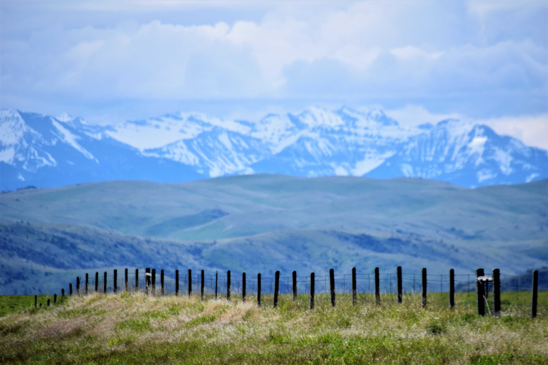 daylight-fence-grass-534394.jpg